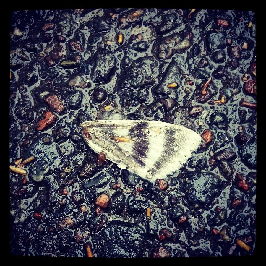 Butterfly Photograph - Broken by Beth Burns