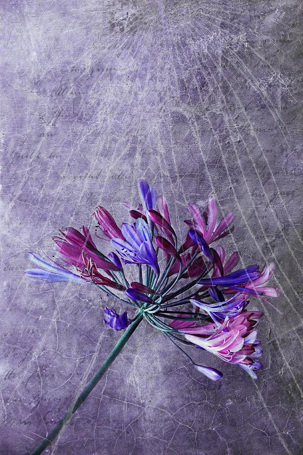 Flowers Photograph - Broken Dreams by Claudia Moeckel