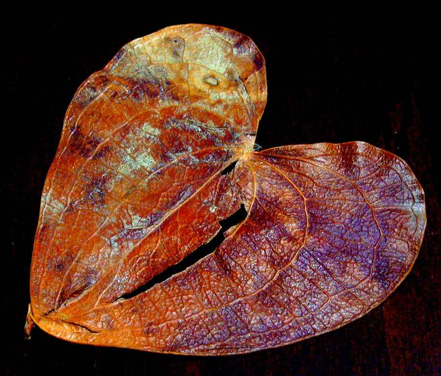 Tree Photograph - Broken Heart  by Fethi Canbaz