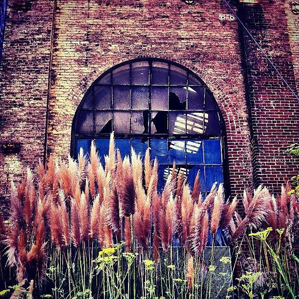 Sanfrancisco Photograph - Broken Window by Julie Gebhardt