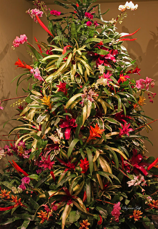 Orchid Christmas Tree.Bromeliad And Orchid Tree