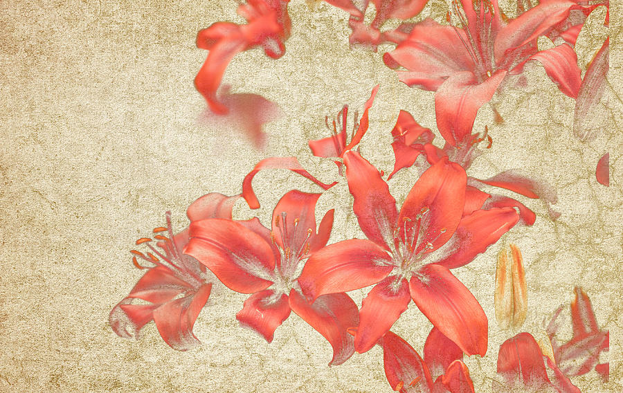 Bronze; Lily; Flower; Bloom; Beauty; Muted; Pretty; Grunge; Texture; Pattern Photograph - Bronze Lily Grunge by Lesley Rigg