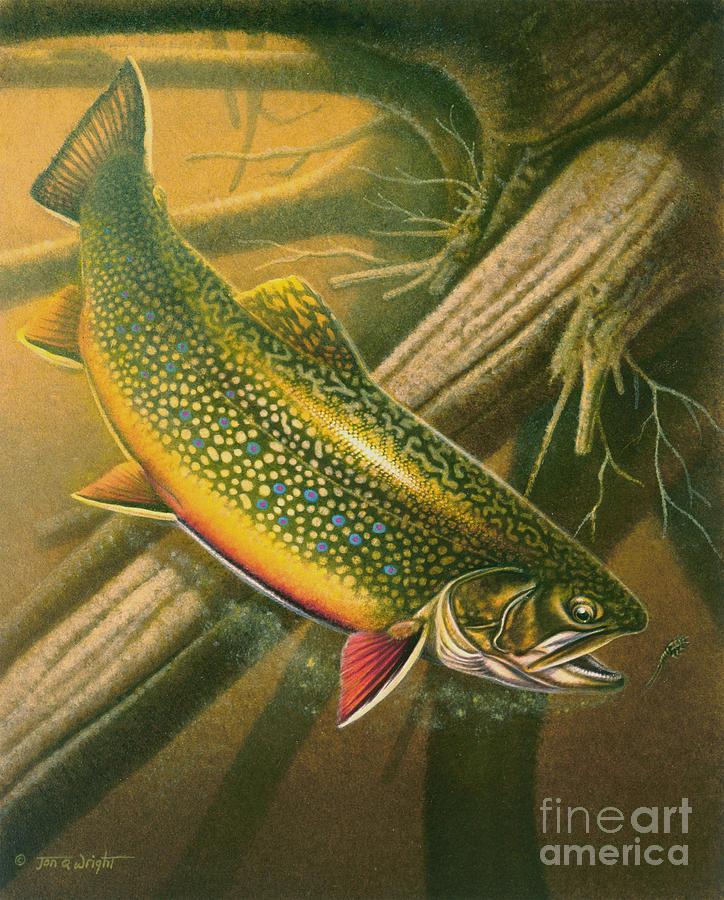 Jon Q Wright Painting - Brook Trout  Hideaway by Jon Q Wright