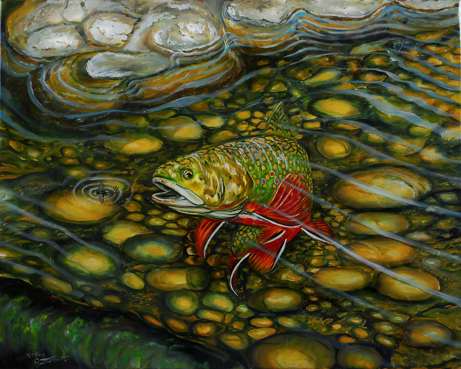 Brook Trout by Steve Ozment