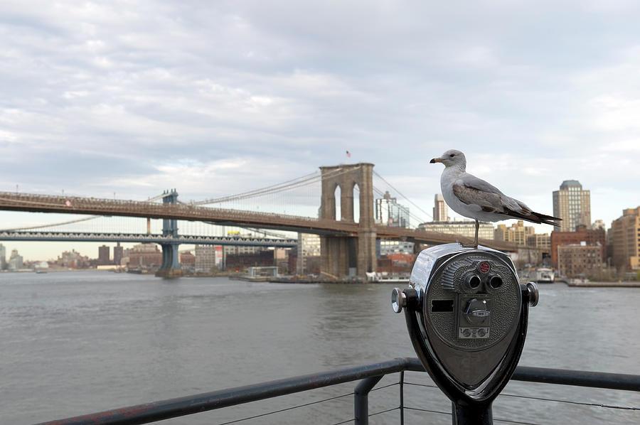 Brooklyn Bridge Photograph by Kevinjeon00