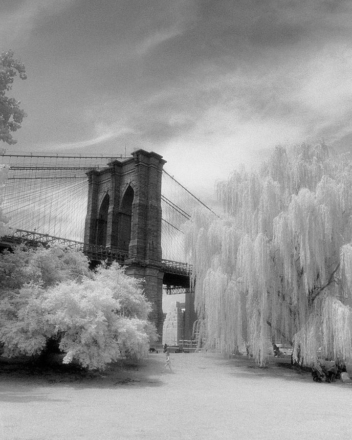 Brooklyn Bridge Willows Photograph by Dave Beckerman