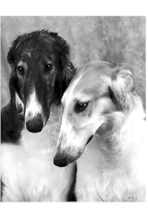Dog Digital Art - Brother And Sister Borzoi  by Maxine Bochnia