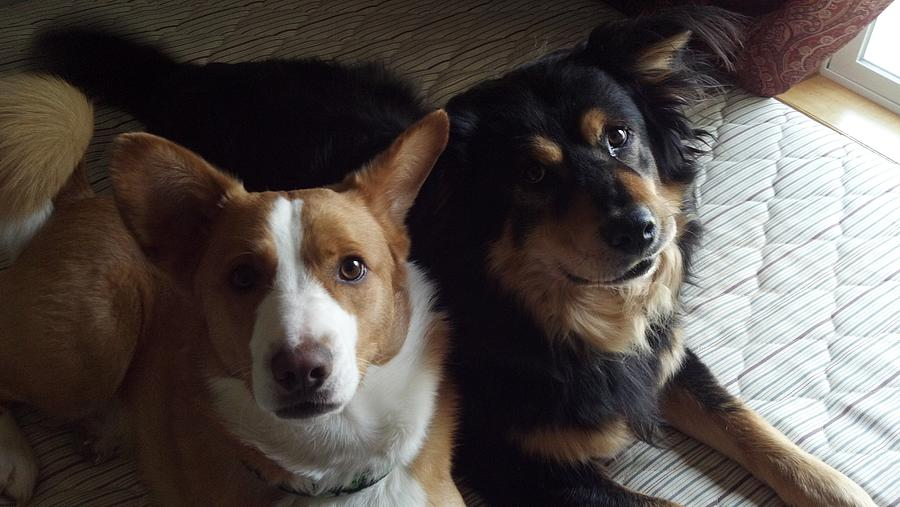 Dogs Photograph - Brothers by Lisa Wormell