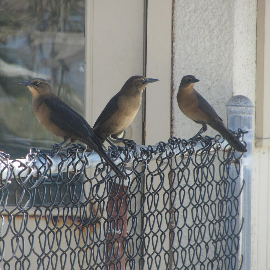 Brown Birds Photograph - Brown Birds At Fernandina Beach by Cathy Lindsey