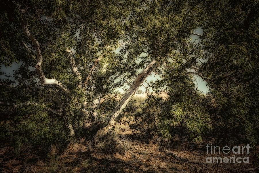 Arizona Photograph - Brown Canyon Sycamore - Toned by Al Andersen
