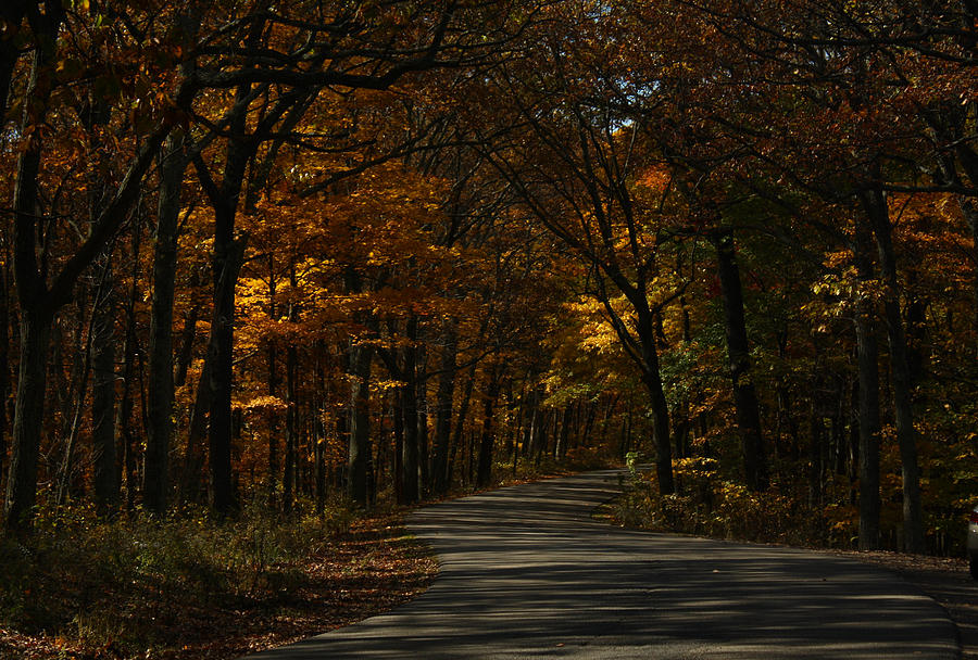 Brown County State Park Photograph - Brown County State Park by Dan McCafferty