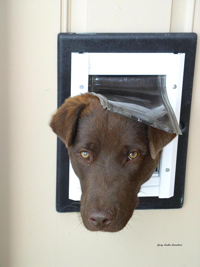 Dog Photograph - Brown Dog by Gary Emilio Cavalieri