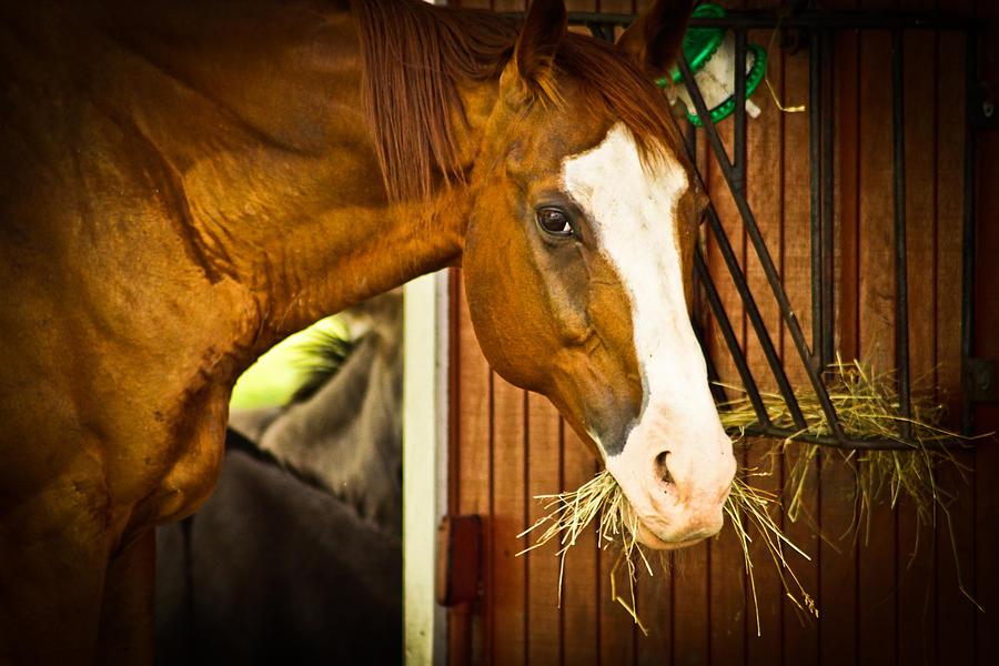 Brown Horse Photograph by Joann Copeland-Paul