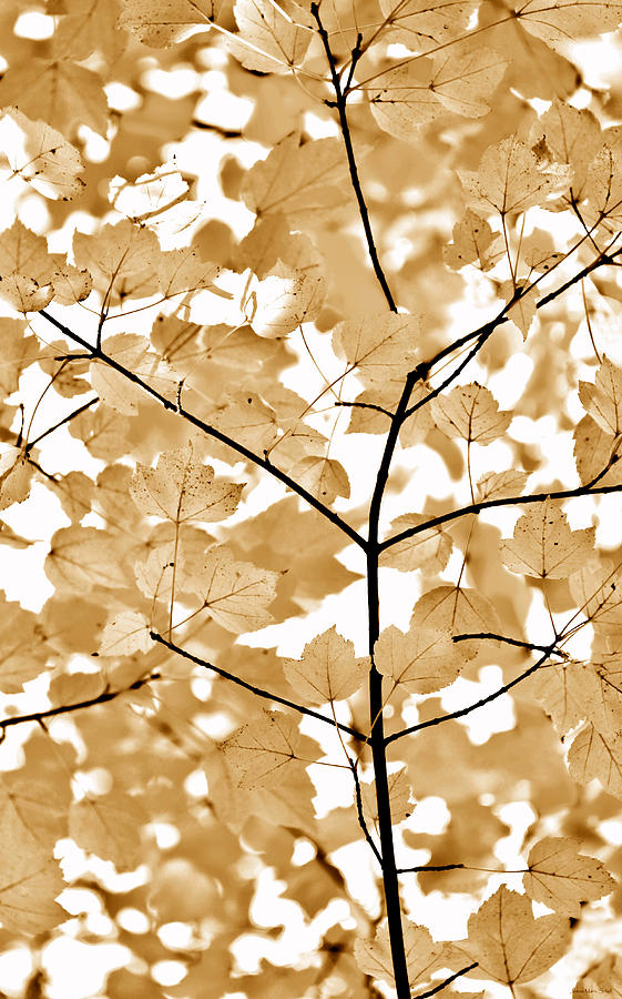 Leaf Photograph - Brown Leaves Melody by Jennie Marie Schell