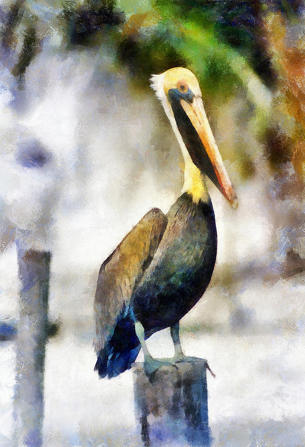 Pelican Painting - Brown Pelican by Lester Phipps