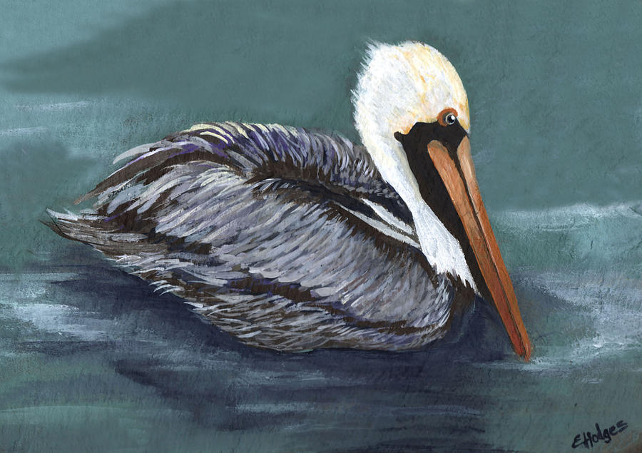 Pelican Painting - Brown Pelican On Water by Elaine Hodges