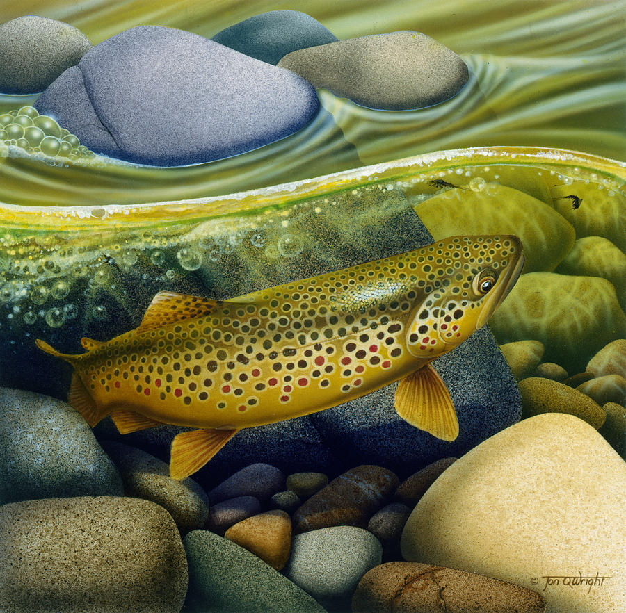 trout art Brown