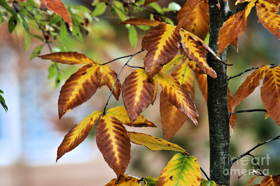 Brown Yellow Leaves by Stan Reckard