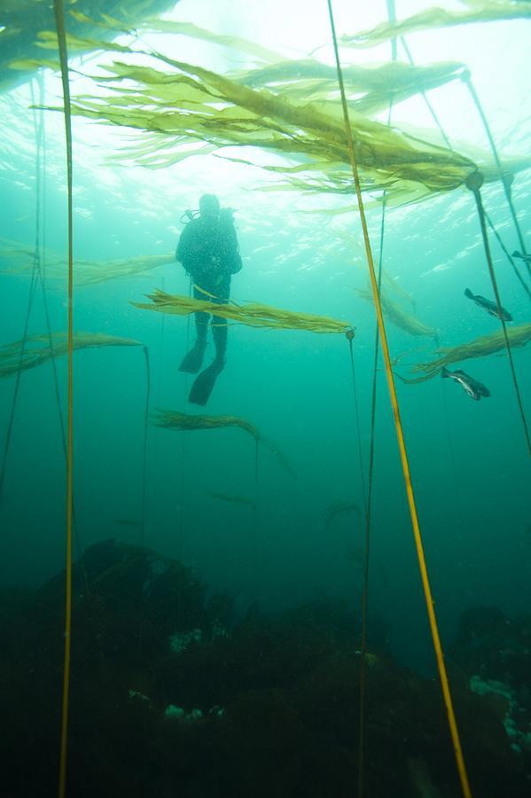 Browning Passage, Scuba Diving Photograph