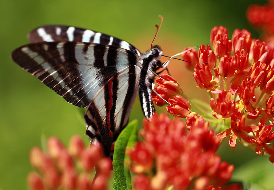 Butterfly Photograph - Brunch by Shelby Waltz