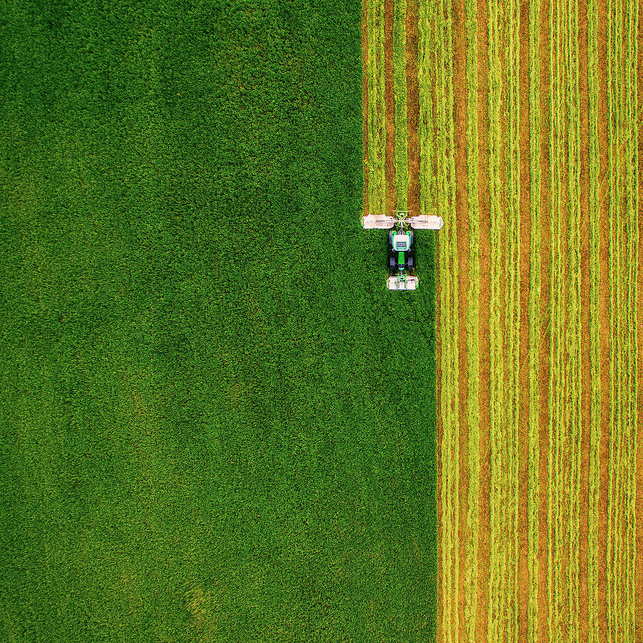 Field Photograph - Brush by Ash Vain