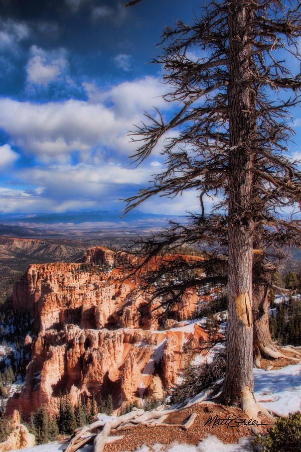 Utah Photograph - Bryce Canyon 1 by Marti Green