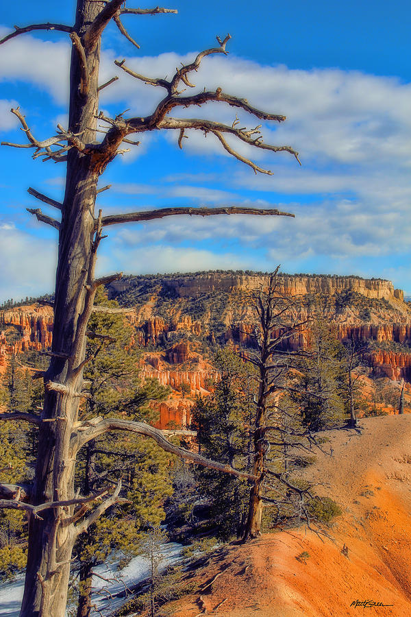 Canyon Bryce Photograph - Bryce Canyon Cliff Tree by Marti Green