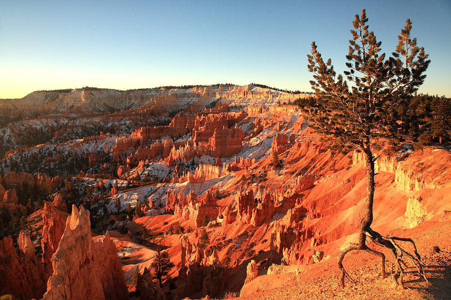 Bryce Canyon National Park Photograph - Bryce Canyon by Darryl Wilkinson