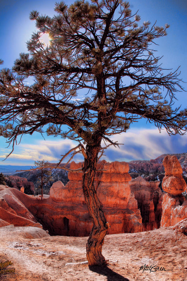 Bryce Canyon Photograph - Bryce Canyon Middle Tree by Marti Green