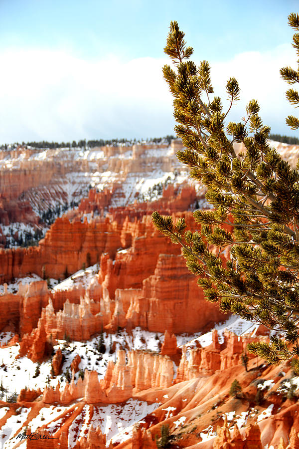Canyon Bryce Photograph - Bryce Canyon Pine Side by Marti Green