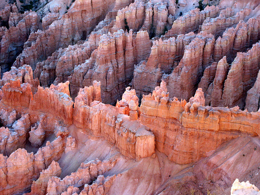Bryce Canyon Photograph - Bryce Canyon Sun Rising by Clifford Pugliese