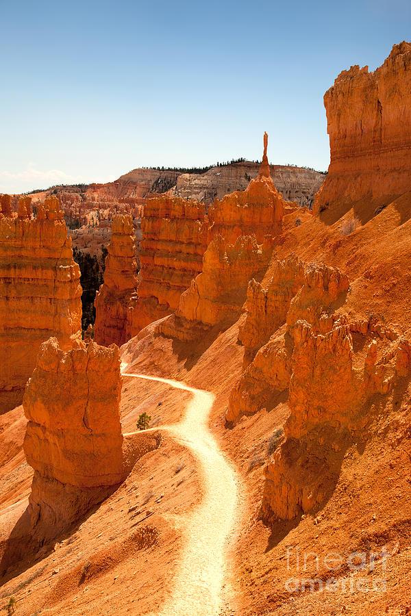 America Photograph - Bryce Canyon Trail by Jane Rix