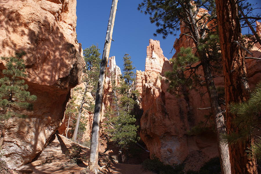 Bryce Canyon National Park Photograph - Bryce Canyon Trail by Michael J Bauer