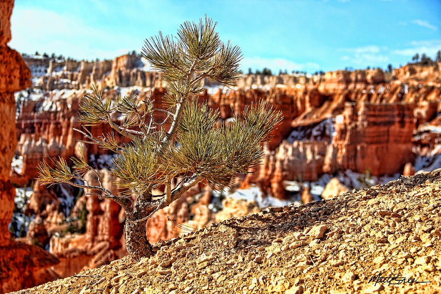 Canyon Bryce Photograph - Bryce Canyon Tree Up Close by Marti Green