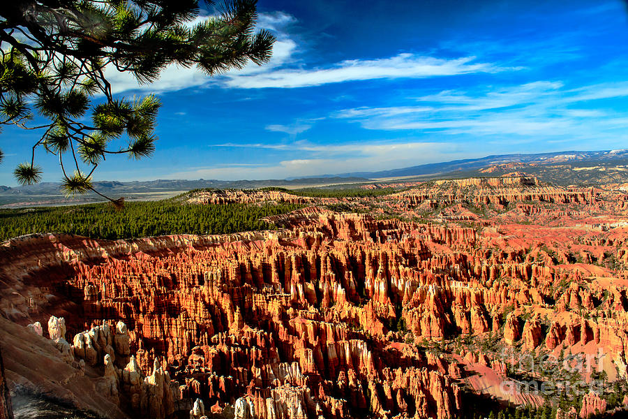 Rock Formations Photograph - Bryce by Robert Bales