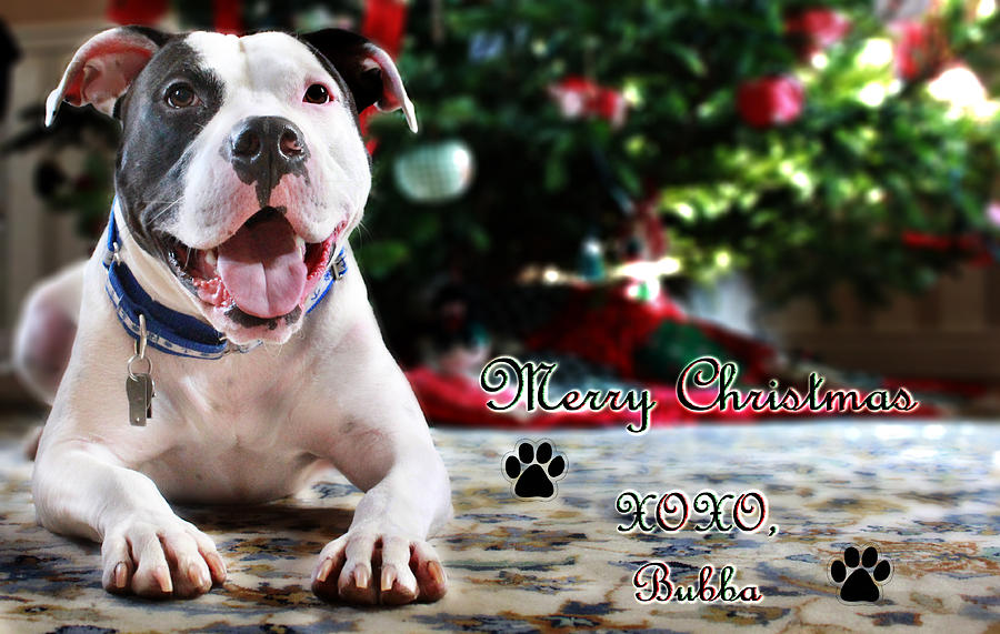 Dog Photograph - Bubbas First Christmas by Shelley Neff