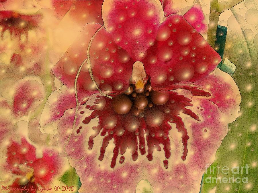 Bubble Bathing Orchid Photograph