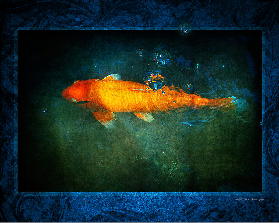 Koi Photograph - Bubbles From Below by Linda Olsen