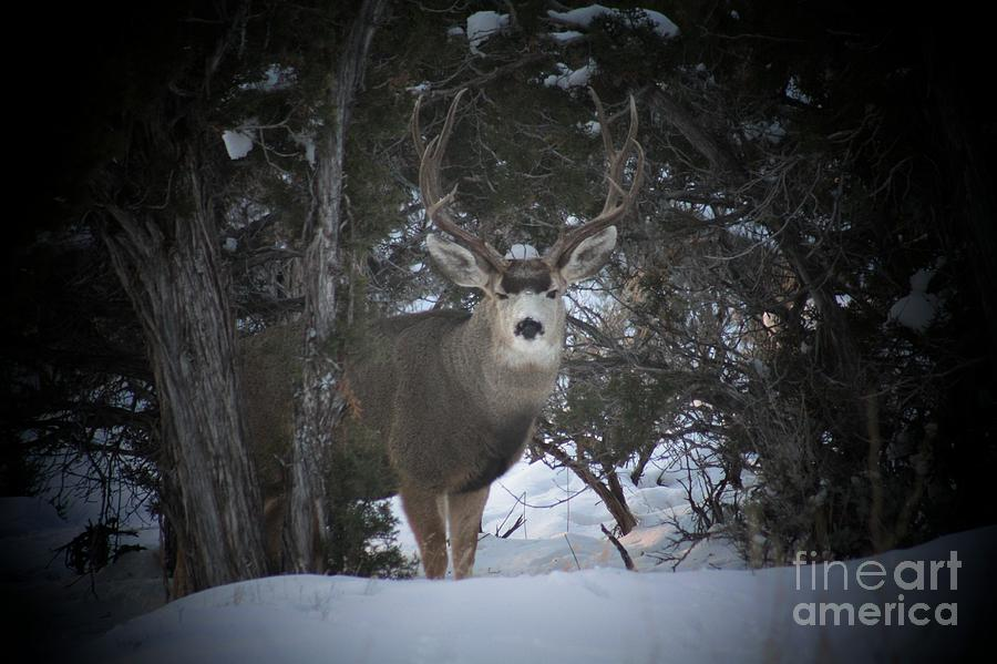 Buck Photograph - Buck I by Brandi Maher