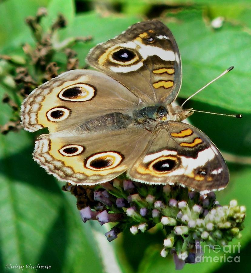 Preguntas y respuestas de la mariposa - NABA