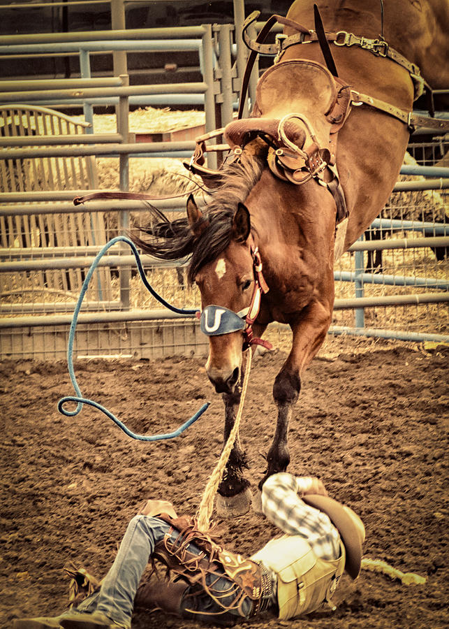 Rodeo Photograph - Bucking by Caitlyn  Grasso