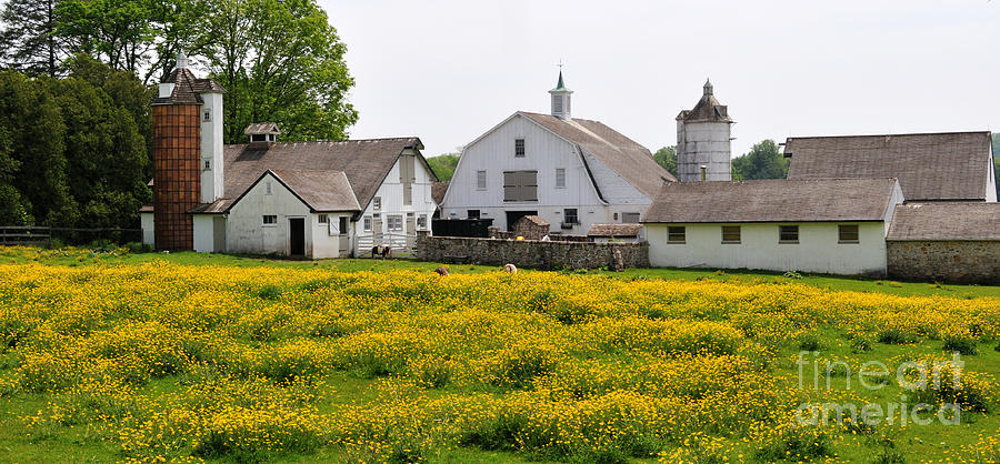Yellow Photograph - Bucks County Spring by Cindy Roesinger