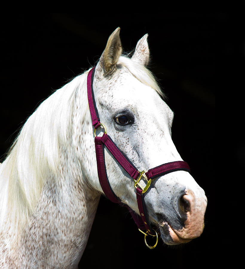 Equine Photograph - Bucky Boy by Mary  Swann