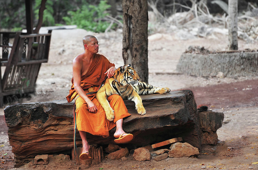 Tiger Photograph - Buddha Adherents by Dmitriy Yevtushyk