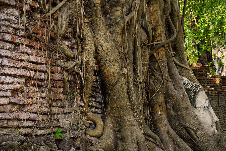Ancient Photograph - Buddha Head Encased In Tree Roots by Paul W Sharpe Aka Wizard of Wonders