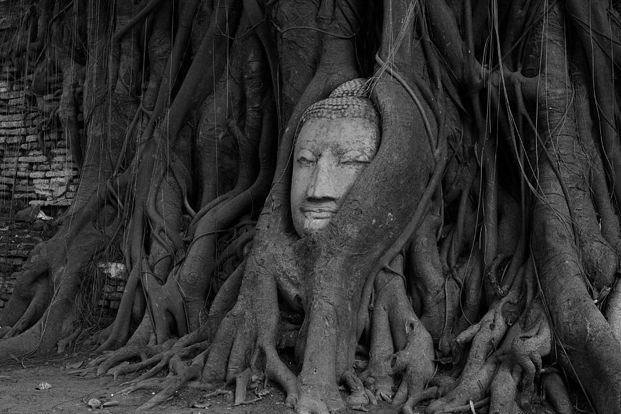 Buddha Photograph - Buddha Head In Roots Of Bodhi Tree by Zestgolf