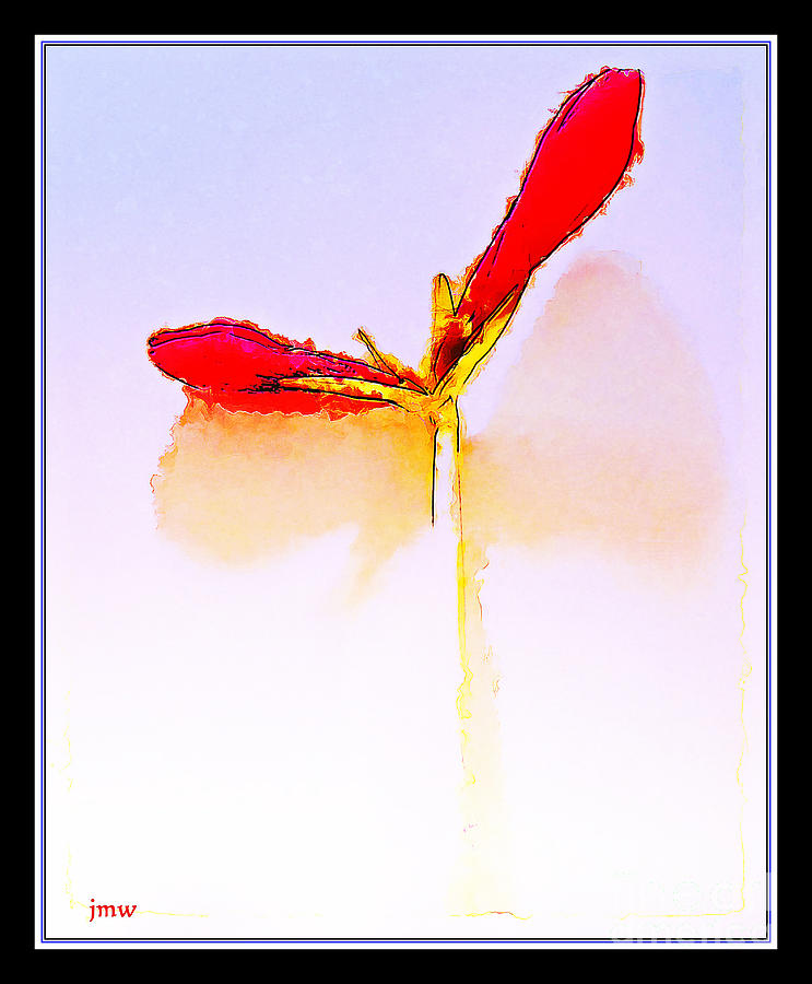 Budding Amaryllis  Photograph by Joseph Welsh