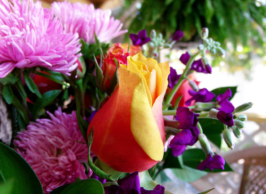 Rosebud Photograph - Budding Beauty by Dawn  Gagnon