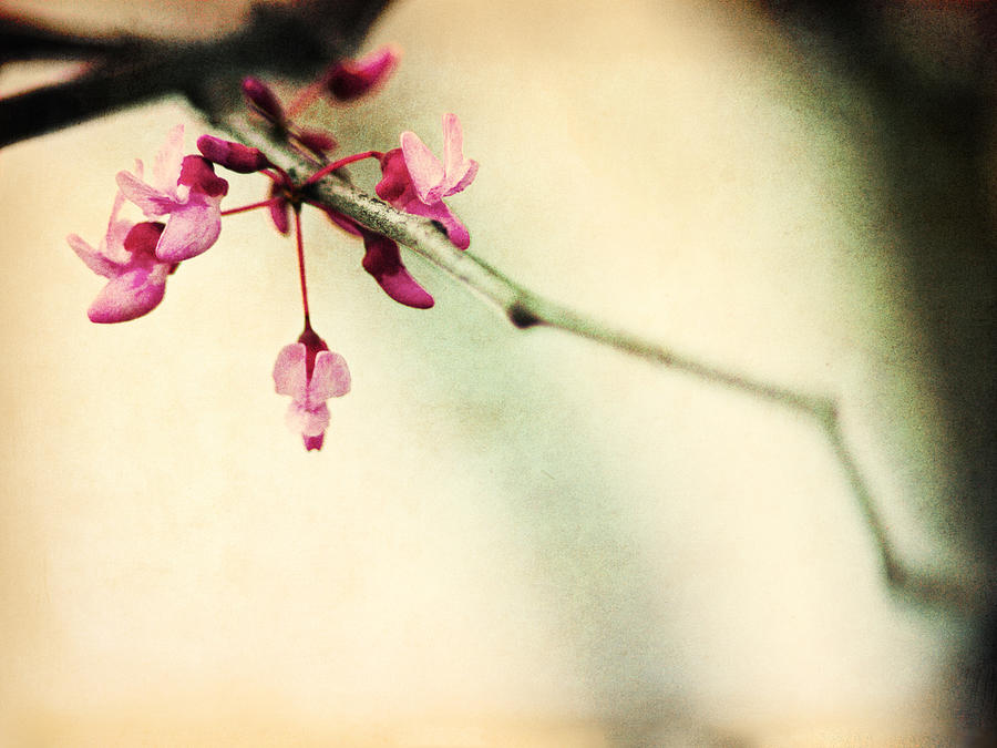Pink Photograph - Budding Spring by Shannon Beck-Coatney
