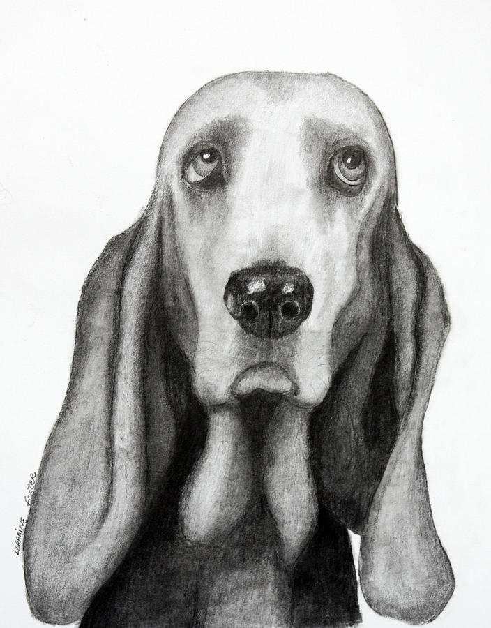 Dogs Drawing - Buddy by Lorraine Foster
